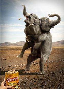 humor_publicidad_elefante_cacahuetes