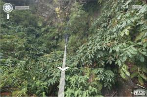 toyota jungle medium