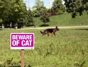 whiskas beware cat 412x312