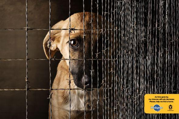 Dog Cage 2