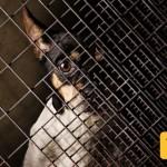 Dog Cage 3