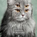 pet show pet food cat 1