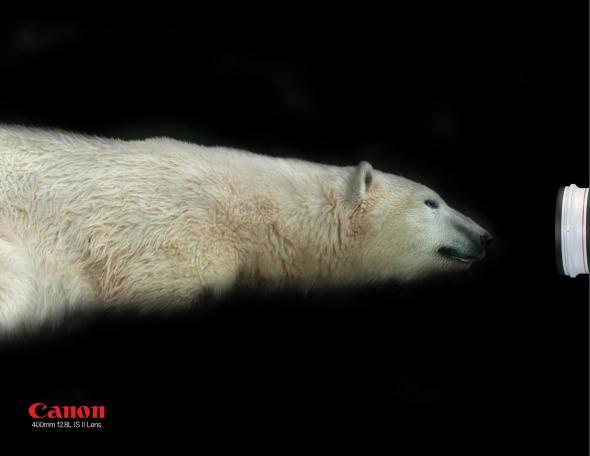 canon_polar_bear